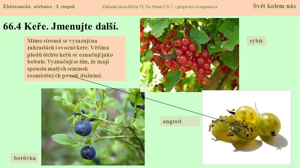 66.5 Zelenina, její druhy Elektronická učebnice - I.