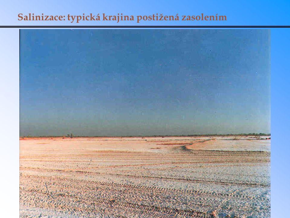 Salinizace: typická krajina postižená zasolením