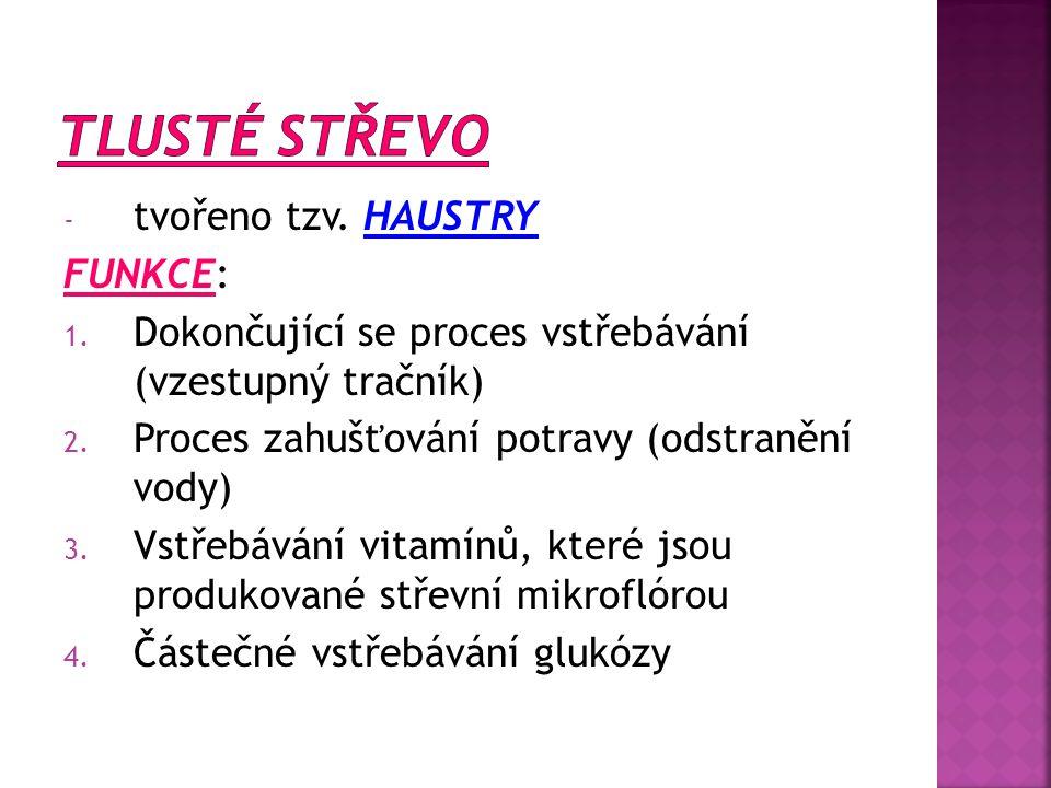 - tvořeno tzv. HAUSTRY FUNKCE: 1. Dokončující se proces vstřebávání (vzestupný tračník) 2. Proces zahušťování potravy (odstranění vody) 3. Vstřebávání
