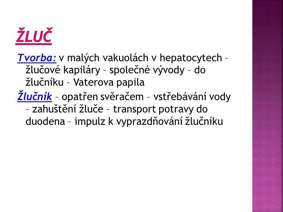 Tvorba: v malých vakuolách v hepatocytech – žlučové kapiláry – společné vývody – do žlučníku – Vaterova papila Žlučník – opatřen svěračem – vstřebáván