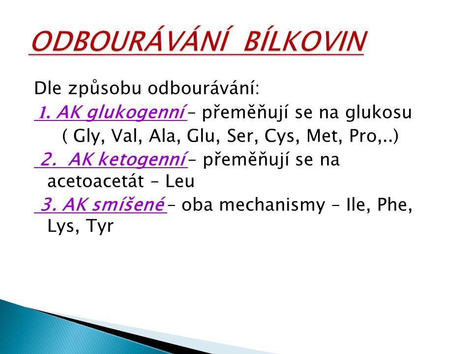 Dle způsobu odbourávání: 1. AK glukogenní – přeměňují se na glukosu ( Gly, Val, Ala, Glu, Ser, Cys, Met, Pro,..) 2. AK ketogenní – přeměňují se na ace