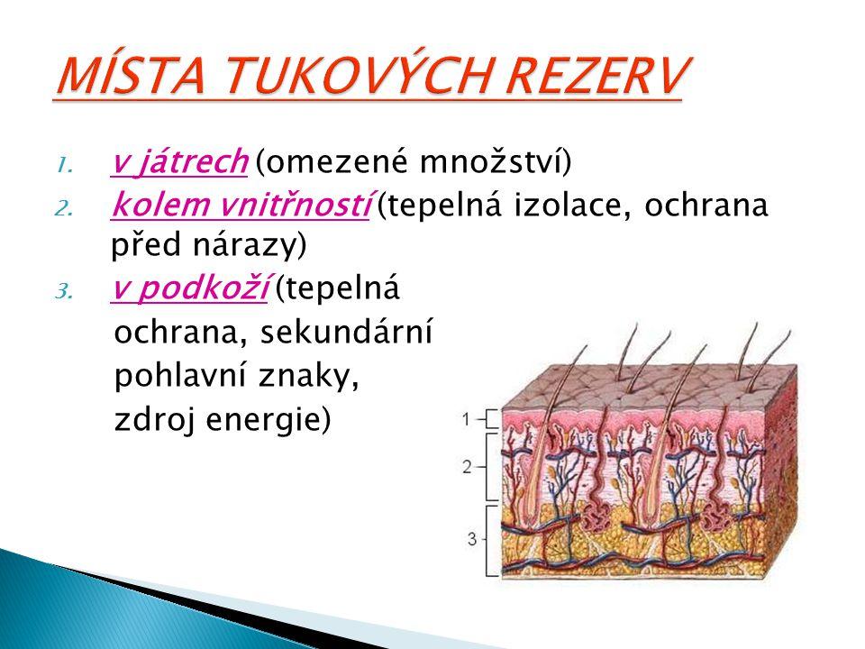 1. v játrech (omezené množství) 2. kolem vnitřností (tepelná izolace, ochrana před nárazy) 3. v podkoží (tepelná ochrana, sekundární pohlavní znaky, z