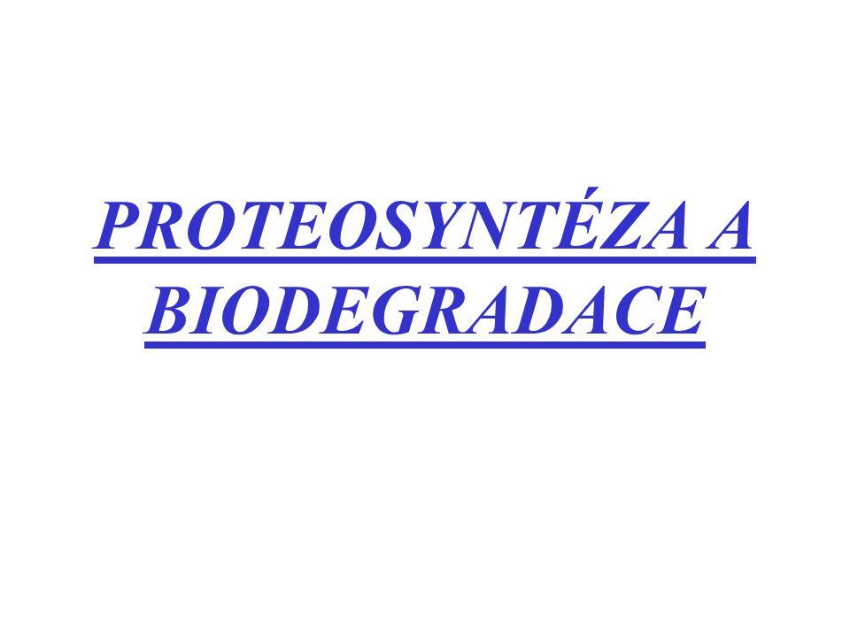PROTEOSYNTÉZA A BIODEGRADACE