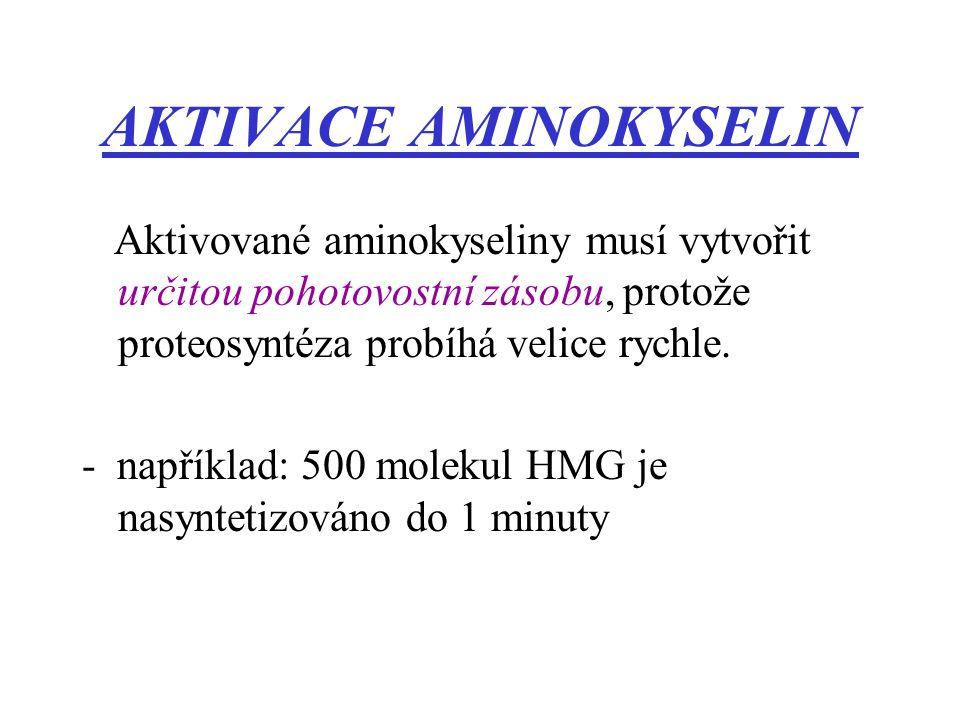 AKTIVACE AMINOKYSELIN Aktivované aminokyseliny musí vytvořit určitou pohotovostní zásobu, protože proteosyntéza probíhá velice rychle. - například: 50