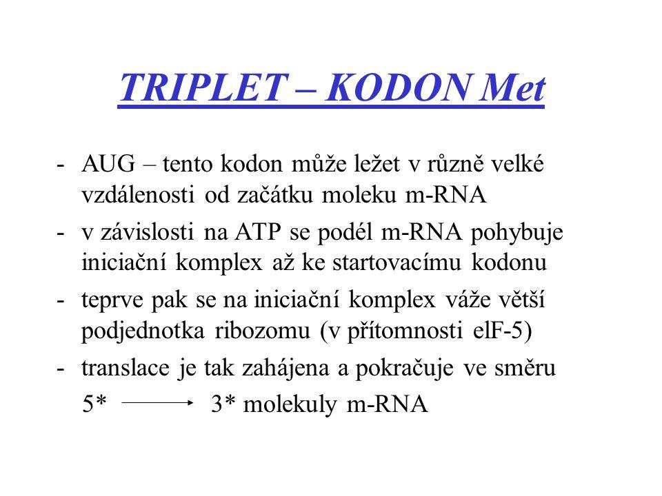 TRIPLET – KODON Met -AUG – tento kodon může ležet v různě velké vzdálenosti od začátku moleku m-RNA -v závislosti na ATP se podél m-RNA pohybuje inici