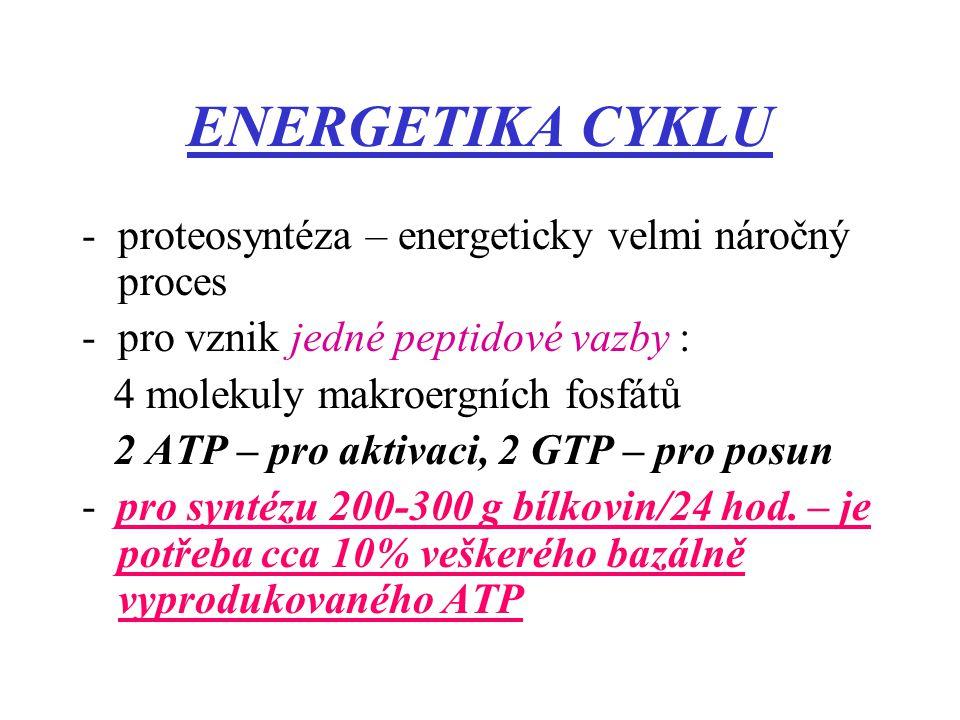 ENERGETIKA CYKLU -proteosyntéza – energeticky velmi náročný proces -pro vznik jedné peptidové vazby : 4 molekuly makroergních fosfátů 2 ATP – pro akti