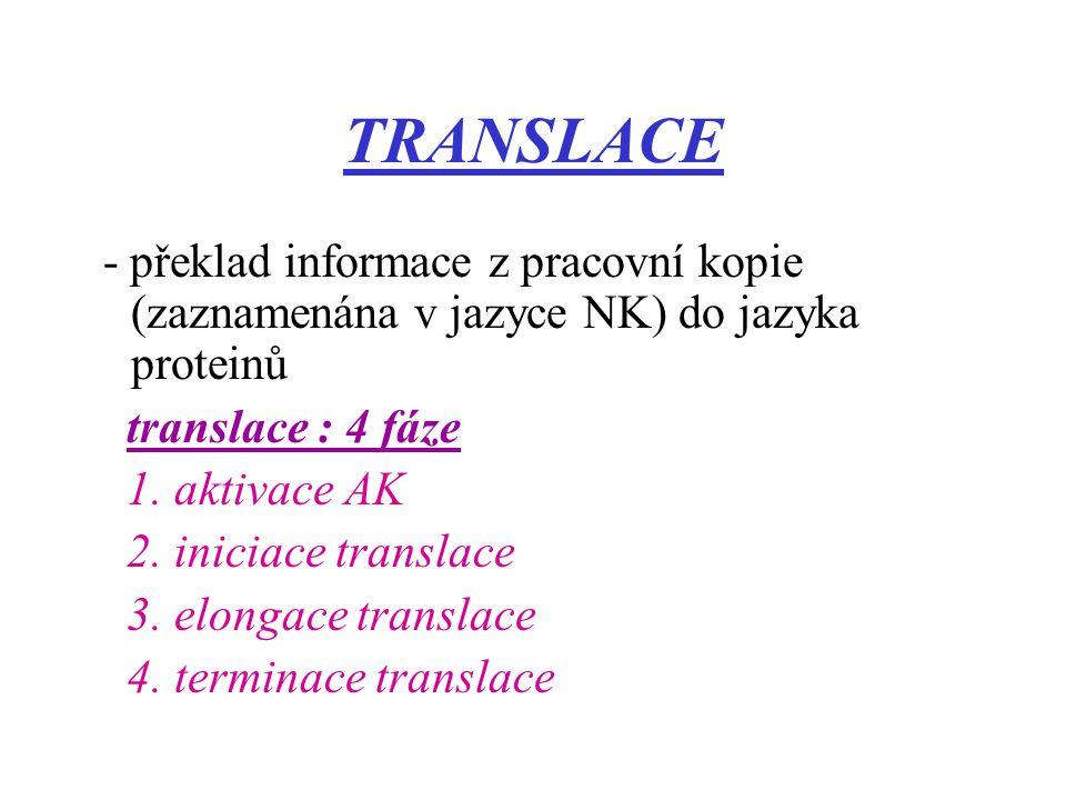 TRANSLACE - překlad informace z pracovní kopie (zaznamenána v jazyce NK) do jazyka proteinů translace : 4 fáze 1. aktivace AK 2. iniciace translace 3.