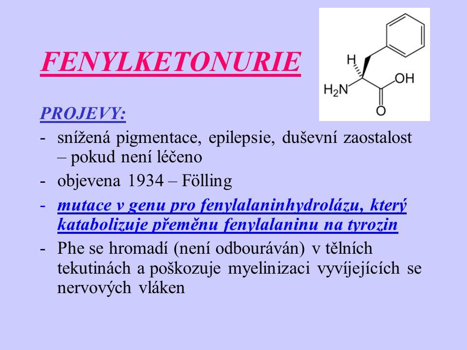 FENYLKETONURIE PROJEVY: -snížená pigmentace, epilepsie, duševní zaostalost – pokud není léčeno -objevena 1934 – Fölling -mutace v genu pro fenylalaninhydrolázu, který katabolizuje přeměnu fenylalaninu na tyrozin -Phe se hromadí (není odbouráván) v tělních tekutinách a poškozuje myelinizaci vyvíjejících se nervových vláken