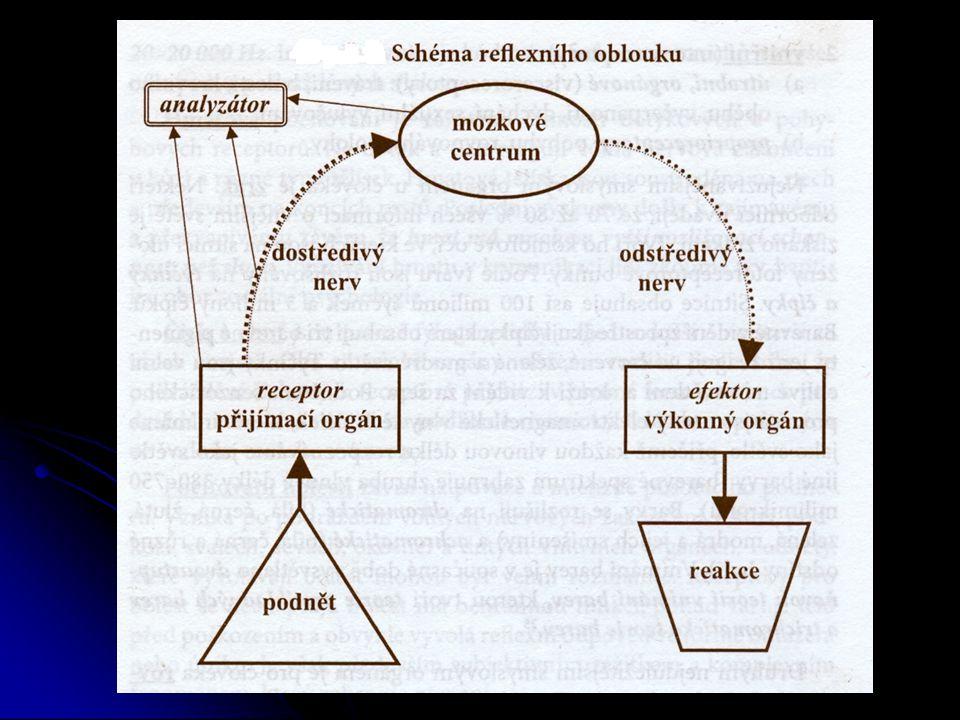 Senzorické procesy a vnímání Obecná charakteristika senzorických procesů Obecná charakteristika senzorických procesů Absolutní a rozdílový práh čivost