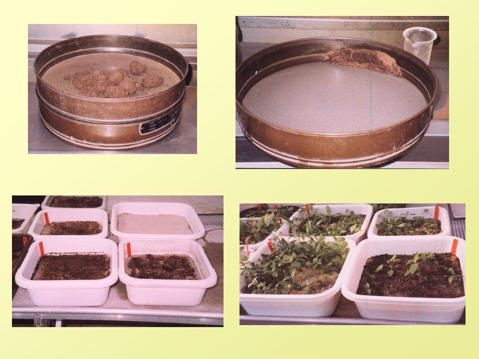 2.Metody objevování semenáčků (seedling emergence) – vzorky jsou rozloženy v květníkách a ponechány ve známých podmínkách k nastartování klíčení semen.