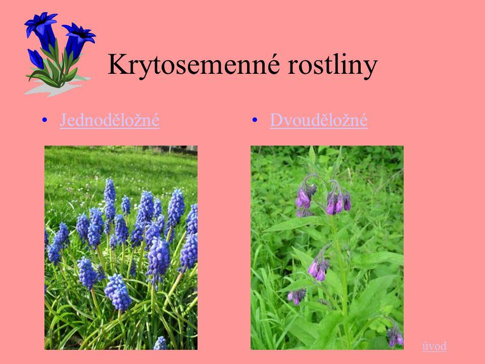 Krytosemenné rostliny Jednoděložné Dvouděložné úvod