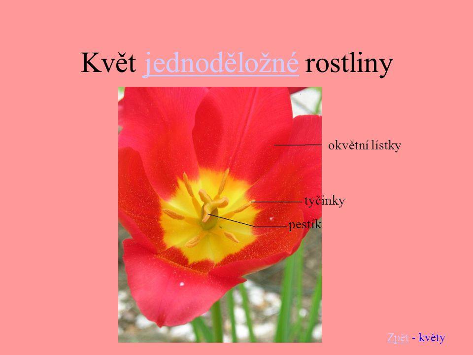 Květ jednoděložné rostlinyjednoděložné ZpětZpět - květy okvětní lístky tyčinky pestík