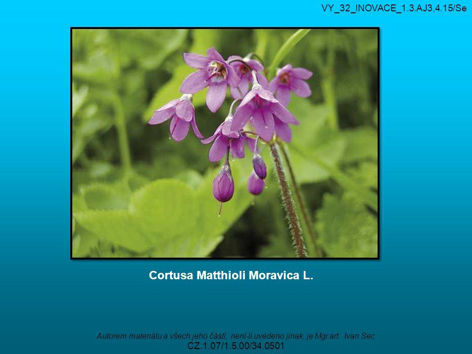 VY_32_INOVACE_1.3.AJ3,4.15/Se Autorem materiálu a všech jeho částí, není-li uvedeno jinak, je Mgr.art. Ivan Sec CZ.1.07/1.5.00/34.0501 Cortusa Matthio