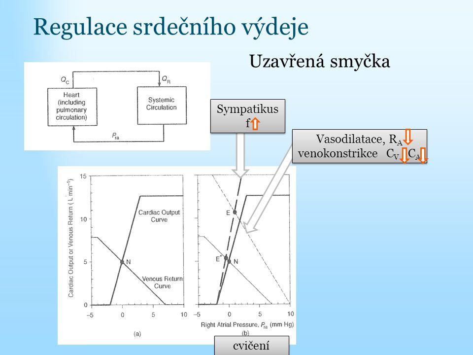 Regulace srdečního výdeje Uzavřená smyčka cvičení Sympatikus f Vasodilatace, R A venokonstrikce C V C A Vasodilatace, R A venokonstrikce C V C A