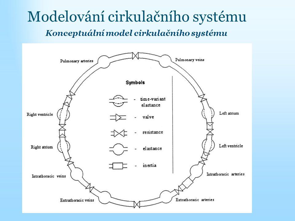 Modelování cirkulačního systému Konceptuální model cirkulačního systému