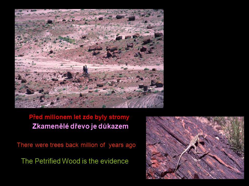 There are even trees (Checker Board in Zion) Zde jsou dokonce stromy ( Checkerova deska v Zionu )