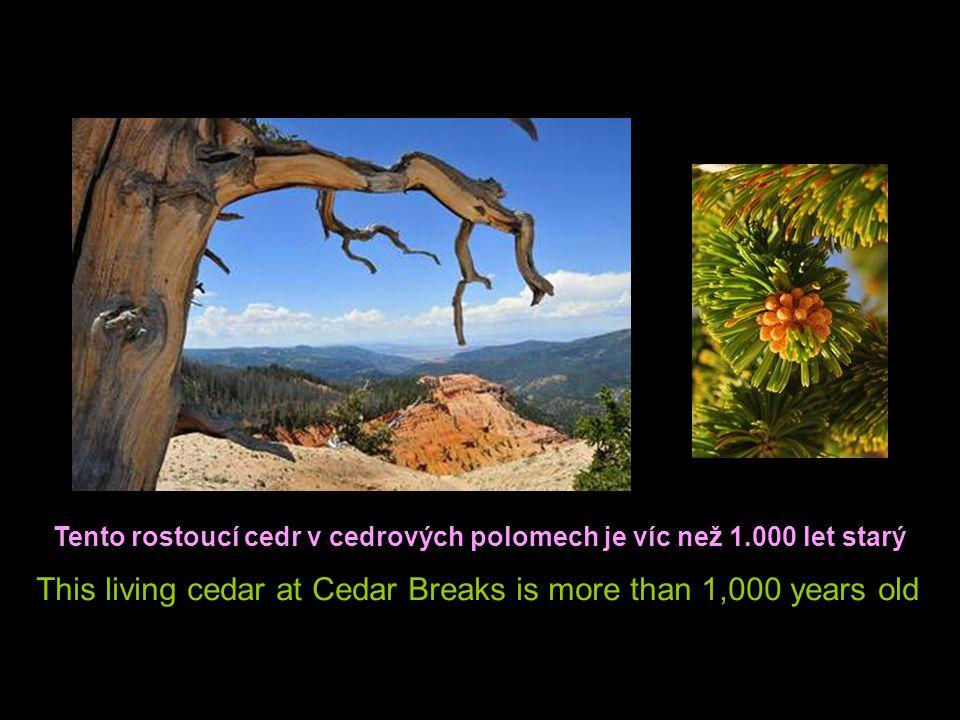 There were trees back million of years ago The Petrified Wood is the evidence Před milionem let zde byly stromy Zkamenělé dřevo je důkazem