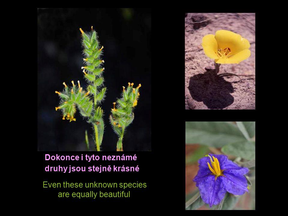 Heard of Columbine ? It is the name of the state flower of Colorado Slyšeli jste o Columbině? Je to název květiny státu Colorado