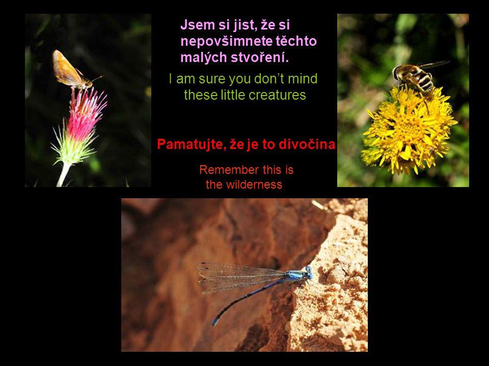 Even these unknown species are equally beautiful Dokonce i tyto neznámé druhy jsou stejně krásné