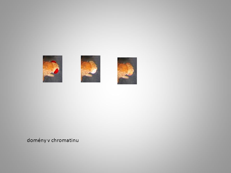 domény v chromatinu