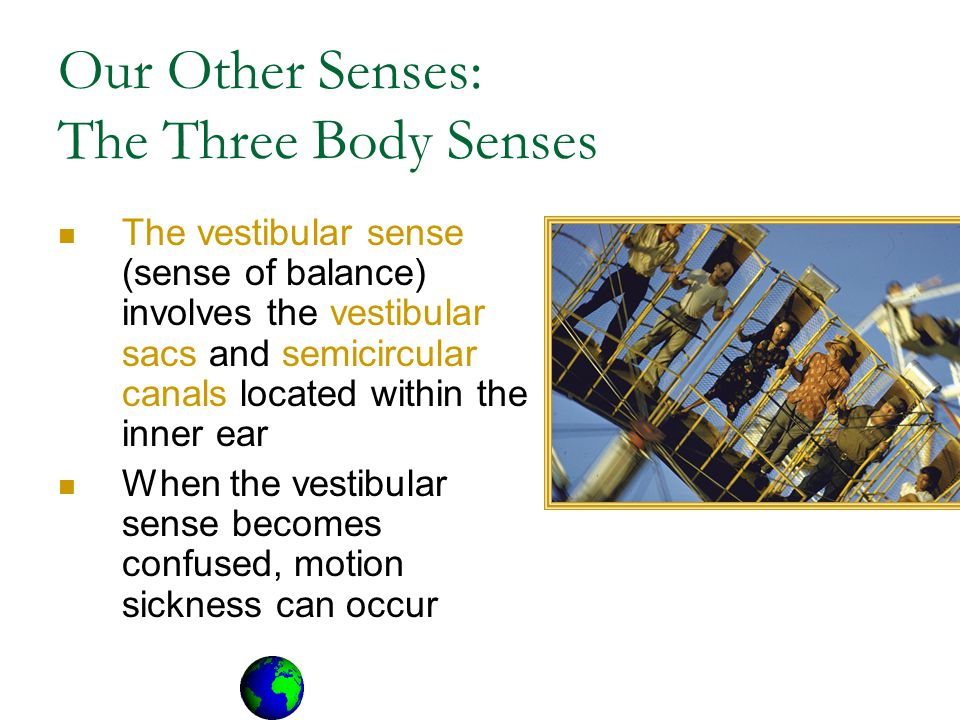 Our Other Senses: The Three Body Senses The vestibular sense (sense of balance) involves the vestibular sacs and semicircular canals located within the inner ear When the vestibular sense becomes confused, motion sickness can occur