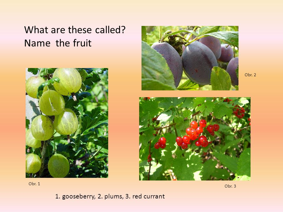 Guess the right fruit This fruit grows on a tree.It is usually red, with a seed in the middle.