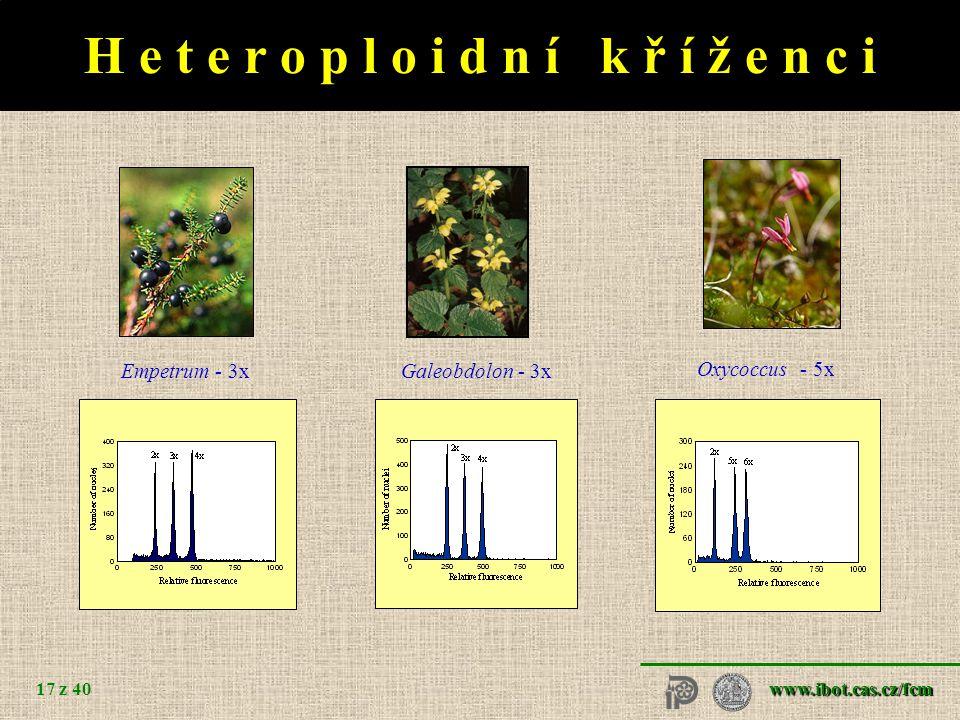 www.ibot.cas.cz/fcm 17 z 40 H e t e r o p l o i d n í k ř í ž e n c i Empetrum - 3x Oxycoccus - 5x Galeobdolon - 3x