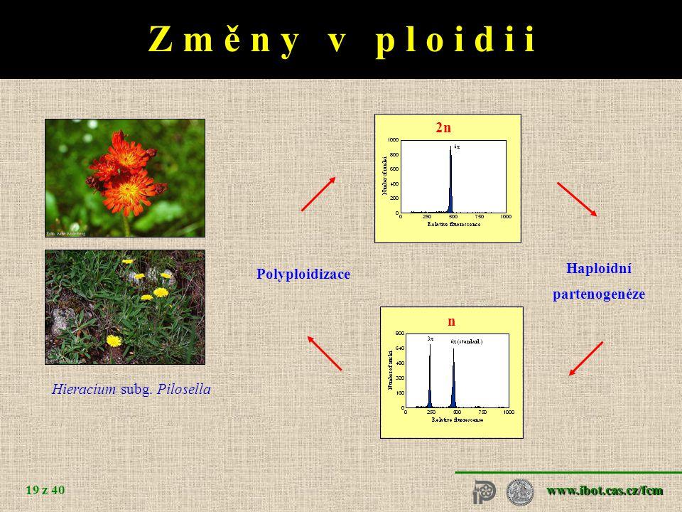 www.ibot.cas.cz/fcm 19 z 40 2n Hieracium subg.