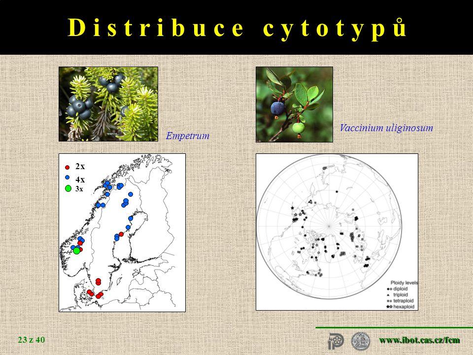 www.ibot.cas.cz/fcm 23 z 40 D i s t r i b u c e c y t o t y p ů 2x 4x 3x Empetrum Vaccinium uliginosum