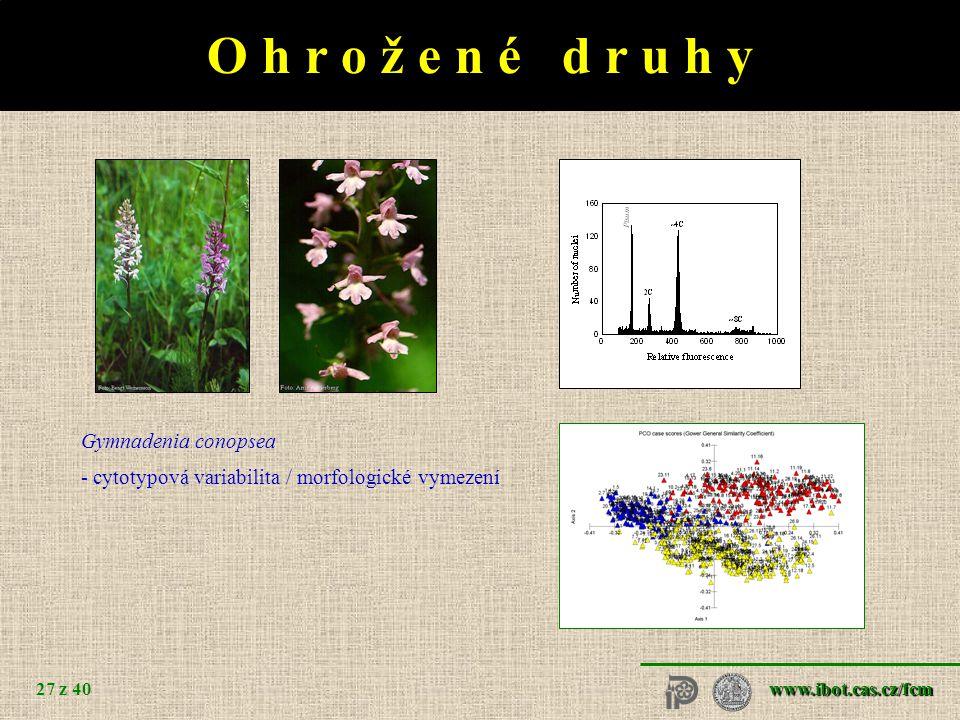 www.ibot.cas.cz/fcm 27 z 40 O h r o ž e n é d r u h y Gymnadenia conopsea - cytotypová variabilita / morfologické vymezení