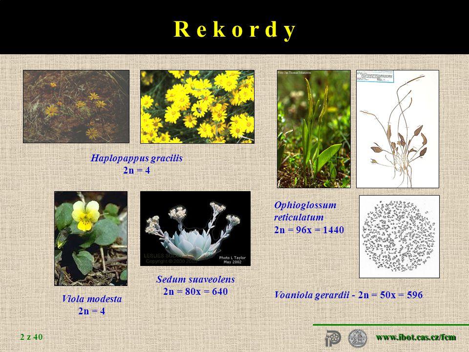www.ibot.cas.cz/fcm 2 z 40 R e k o r d y Haplopappus gracilis 2n = 4 Viola modesta 2n = 4 Ophioglossum reticulatum 2n = 96x = 1440 Voaniola gerardii - 2n = 50x = 596 Sedum suaveolens 2n = 80x = 640