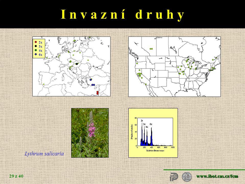 www.ibot.cas.cz/fcm 29 z 40 I n v a z n í d r u h y Lythrum salicaria Vaccinium - 3x 2x 3x 4x 6x