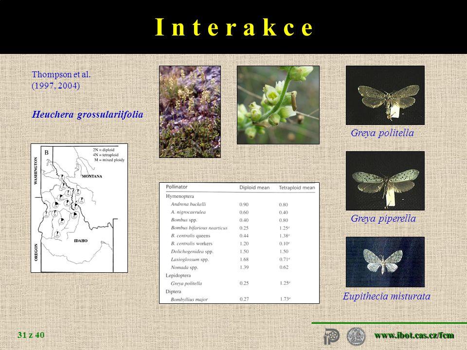 www.ibot.cas.cz/fcm 31 z 40 I n t e r a k c e Heuchera grossulariifolia Thompson et al.