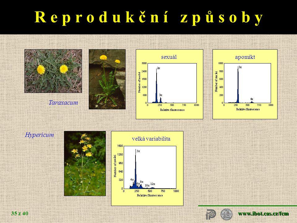 www.ibot.cas.cz/fcm 35 z 40 sexuálapomikt Taraxacum velká variabilita Hypericum R e p r o d u k č n í z p ů s o b y
