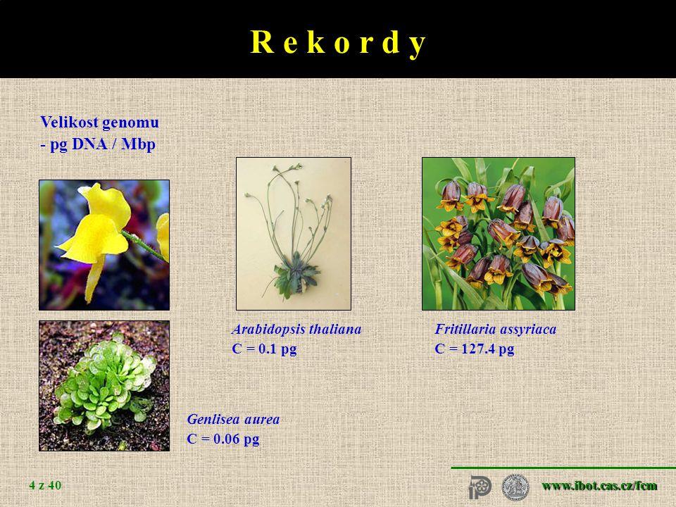 www.ibot.cas.cz/fcm 4 z 40 Arabidopsis thaliana C = 0.1 pg Fritillaria assyriaca C = 127.4 pg Genlisea aurea C = 0.06 pg R e k o r d y Velikost genomu - pg DNA / Mbp