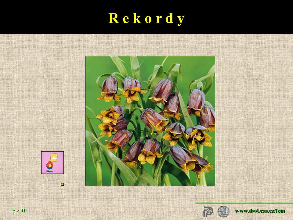 www.ibot.cas.cz/fcm 5 z 40 R e k o r d y