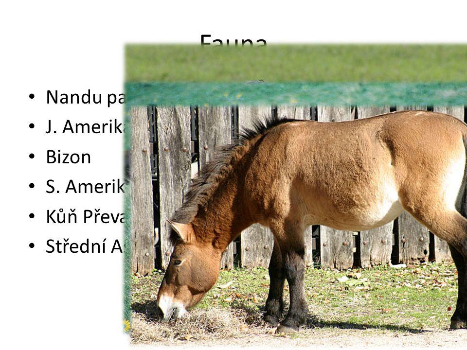 Fauna Nandu pampový J. Amerika Bizon S. Amerika Kůň Převalského Střední Asie
