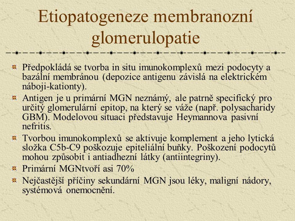 Etiopatogeneze membranozní glomerulopatie Předpokládá se tvorba in situ imunokomplexů mezi podocyty a bazální membránou (depozice antigenu závislá na