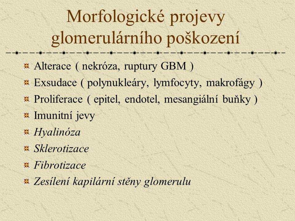 Morfologické projevy glomerulárního poškození Alterace ( nekróza, ruptury GBM ) Exsudace ( polynukleáry, lymfocyty, makrofágy ) Proliferace ( epitel,