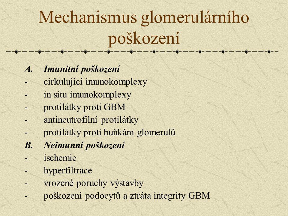 Mechanismus glomerulárního poškození A.Imunitní poškození -cirkulující imunokomplexy -in situ imunokomplexy -protilátky proti GBM -antineutrofilní pro