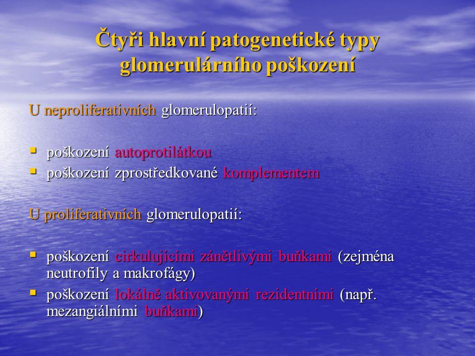 Klasifikace glomerulopatií Klinická: primární x sekundární Klinická: primární x sekundární Dle časového průběhu: akutní x subakutní x chronické Dle časového průběhu: akutní x subakutní x chronické Dle nálezu v renální biopsii: fokální x segmentální x difúzní Dle nálezu v renální biopsii: fokální x segmentální x difúzní Dle buněčnosti: neproliferativní x proliferativní Dle buněčnosti: neproliferativní x proliferativní Dle imunofluorescence: Dle imunofluorescence: