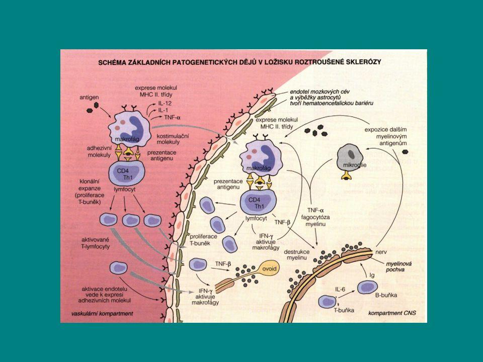 Přímý podíl thymu na etiopatogenezi.