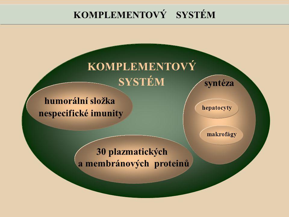 KOMPLEMENTOVÝ SYSTÉM humorální složka nespecifické imunity KOMPLEMENTOVÝ SYSTÉM 30 plazmatických a membránových proteinů syntéza hepatocyty makrofágy