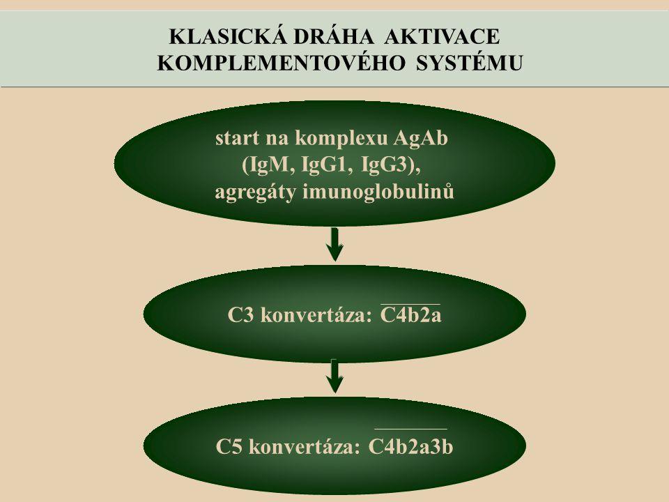 KLASICKÁ DRÁHA AKTIVACE KOMPLEMENTOVÉHO SYSTÉMU start na komplexu AgAb (IgM, IgG1, IgG3), agregáty imunoglobulinů C3 konvertáza: C4b2a C5 konvertáza: C4b2a3b