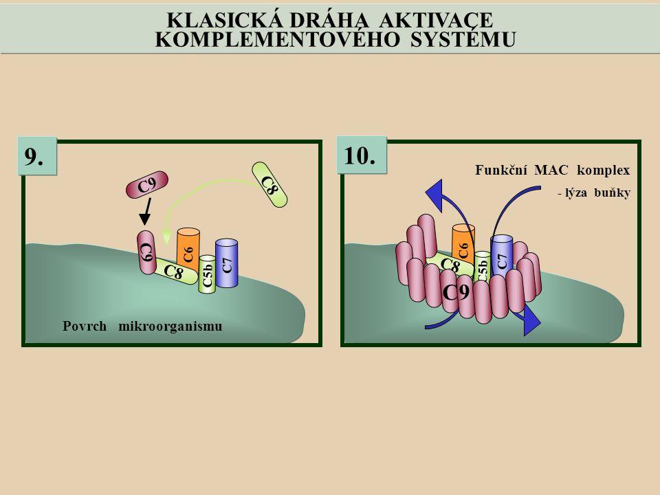C6 C5b C7 C9 C8 C9 9.Povrch mikroorganismu C6 C5b C7 C8 10.