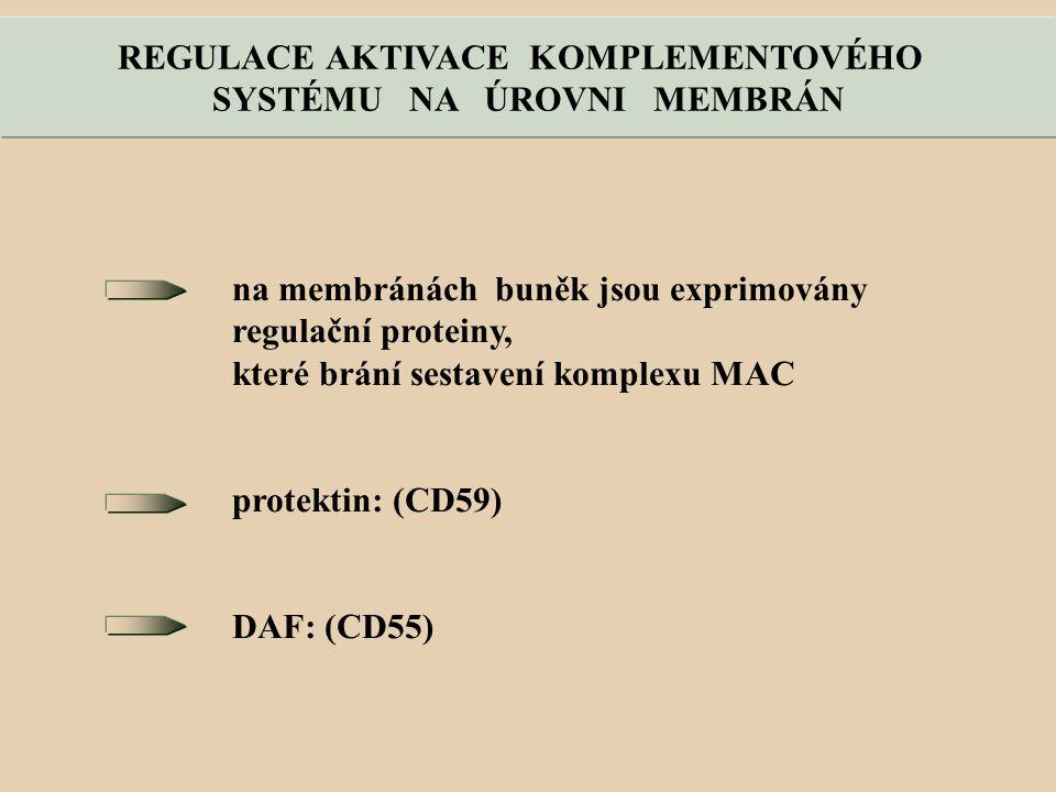 na membránách buněk jsou exprimovány regulační proteiny, které brání sestavení komplexu MAC protektin: (CD59) DAF: (CD55) REGULACE AKTIVACE KOMPLEMENTOVÉHO SYSTÉMU NA ÚROVNI MEMBRÁN