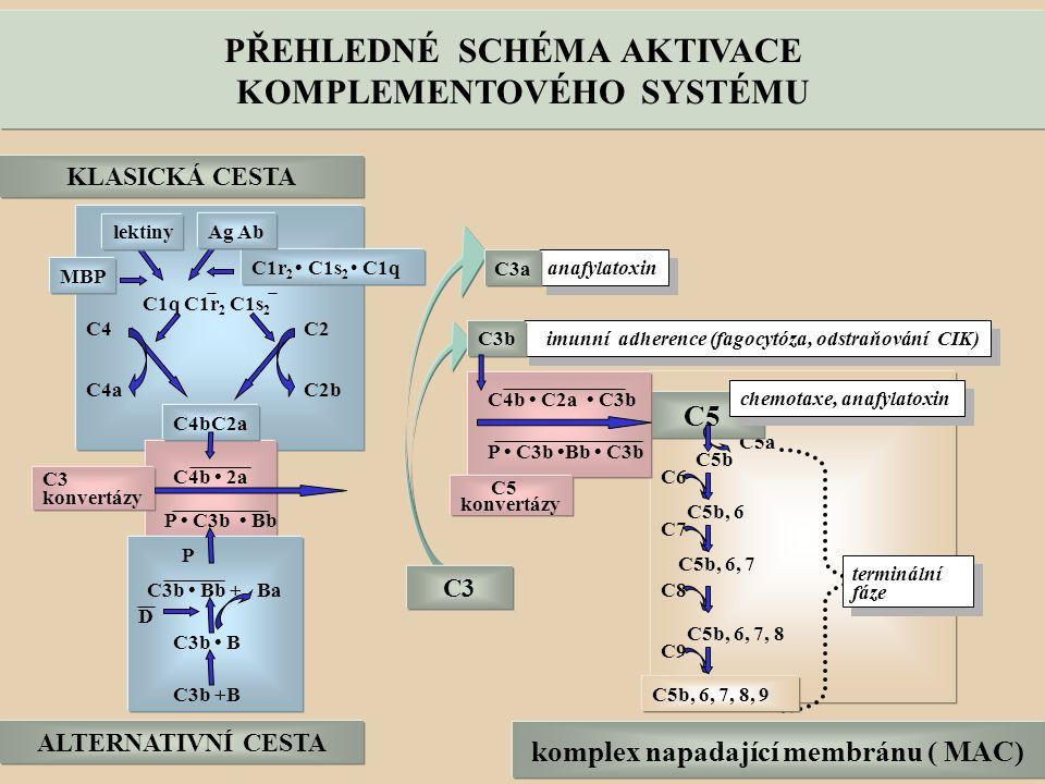 KLASICKÁ CESTA C1q C1r 2 C1s 2 C4bC2a C4C2 C2bC4a C4b 2a C3 konvertázy P C3b Bb ALTERNATIVNÍ CESTA C3b +B C3b B C3b Bb + Ba P D anafylatoxin imunní adherence (fagocytóza, odstraňování CIK) C5a C5b C6 C5b, 6 C7 C8 C9 C5b, 6, 7 C5b, 6, 7, 8 komplex napadající membránu ( MAC) terminální fáze terminální fáze C1r 2 C1s 2 C1q C3 C3a C3b C5b, 6, 7, 8, 9 C5 C4b C2a C3b P C3b Bb C3b MBP Ag Ab lektiny C5 konvertázy PŘEHLEDNÉ SCHÉMA AKTIVACE KOMPLEMENTOVÉHO SYSTÉMU chemotaxe, anafylatoxin