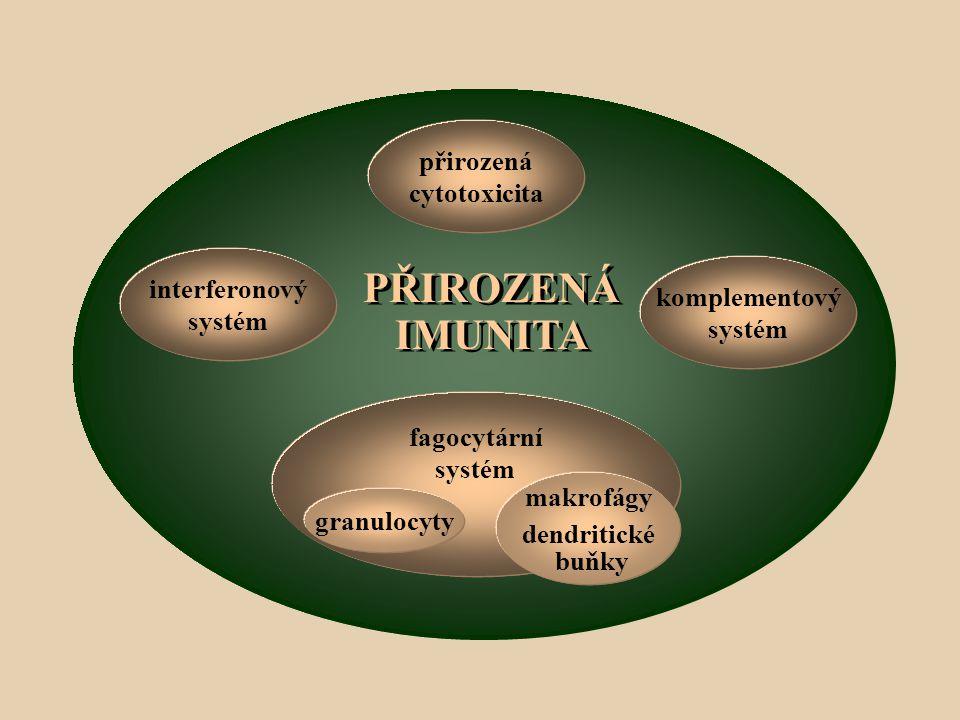 interferonový systém fagocytární systém makrofágy dendritické buňky komplementový systém přirozená cytotoxicita granulocyty PŘIROZENÁ IMUNITA PŘIROZENÁ IMUNITA
