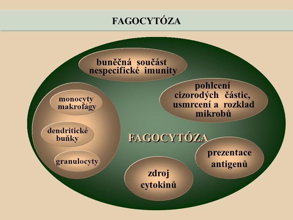FAGOCYTÓZA buněčná součást nespecifické imunity pohlcení cizorodých částic, usmrcení a rozklad mikrobů monocyty makrofágy dendritické buňky granulocyty prezentace antigenů zdroj cytokinů