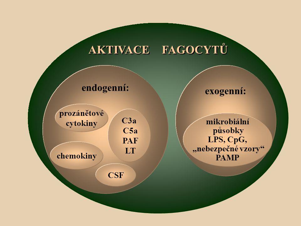 """AKTIVACE FAGOCYTŮ exogenní: endogenní: mikrobiální působky LPS, CpG, """"nebezpečné vzory PAMP CSF chemokiny C3a C5a PAF LT prozánětové cytokiny"""